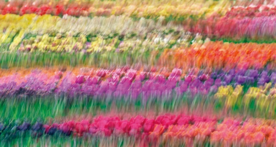 Wiosna w kolorach